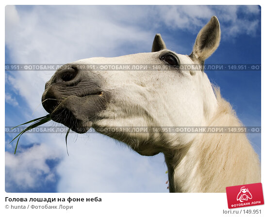 Голова лошади на фоне неба, фото № 149951, снято 3 июня 2007 г. (c) hunta / Фотобанк Лори