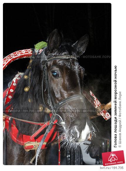 Голова лошади зимней морозной ночью, фото № 191735, снято 21 декабря 2007 г. (c) Шахов Андрей / Фотобанк Лори