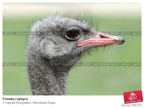 Голова страуса, фото № 187211, снято 30 апреля 2007 г. (c) Сергей Попсуевич / Фотобанк Лори