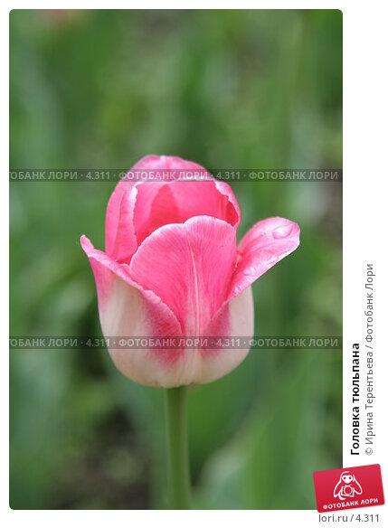Купить «Головка тюльпана», эксклюзивное фото № 4311, снято 29 мая 2006 г. (c) Ирина Терентьева / Фотобанк Лори