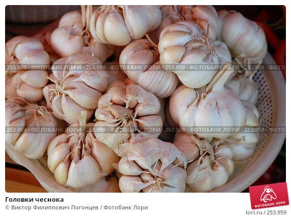 Головки чеснока, фото № 253959, снято 27 сентября 2006 г. (c) Виктор Филиппович Погонцев / Фотобанк Лори