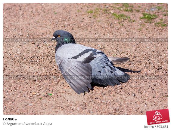 Купить «Голубь», фото № 303651, снято 28 мая 2008 г. (c) Argument / Фотобанк Лори