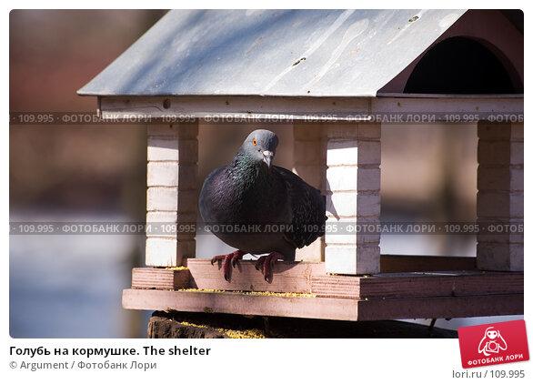 Купить «Голубь на кормушке. The shelter», фото № 109995, снято 28 марта 2007 г. (c) Argument / Фотобанк Лори