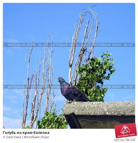 Купить «Голубь на краю балкона», фото № 56127, снято 26 июня 2007 г. (c) Светлана / Фотобанк Лори
