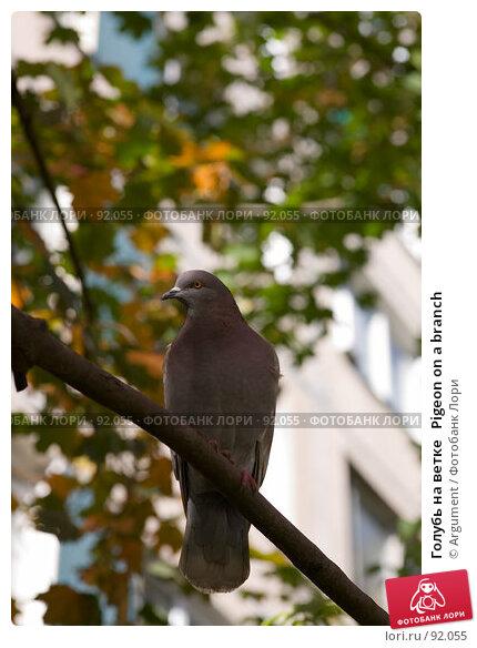 Голубь на ветке   Pigeon on a branch, фото № 92055, снято 20 сентября 2007 г. (c) Argument / Фотобанк Лори