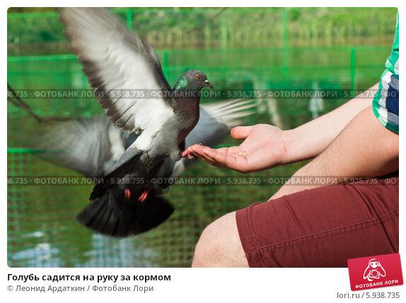 К чему снятся голуби в руках — успех в личной и трудовой деятельности.