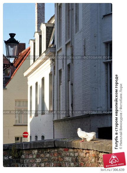 Купить «Голубь в старом европейском городе», фото № 306639, снято 26 апреля 2018 г. (c) Николай Винокуров / Фотобанк Лори