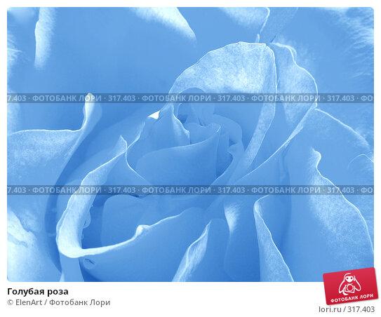 Голубая роза, фото № 317403, снято 20 января 2017 г. (c) ElenArt / Фотобанк Лори