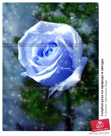 Голубая роза на природе и звезды, фото № 317371, снято 23 июля 2017 г. (c) ElenArt / Фотобанк Лори