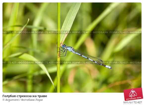 Голубая стрекоза на траве, фото № 72427, снято 5 августа 2007 г. (c) Argument / Фотобанк Лори