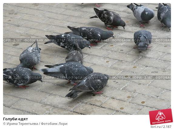 Голуби едят, эксклюзивное фото № 2187, снято 19 августа 2005 г. (c) Ирина Терентьева / Фотобанк Лори