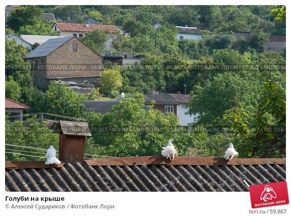 Голуби на крыше, фото № 59867, снято 2 июня 2007 г. (c) Алексей Судариков / Фотобанк Лори