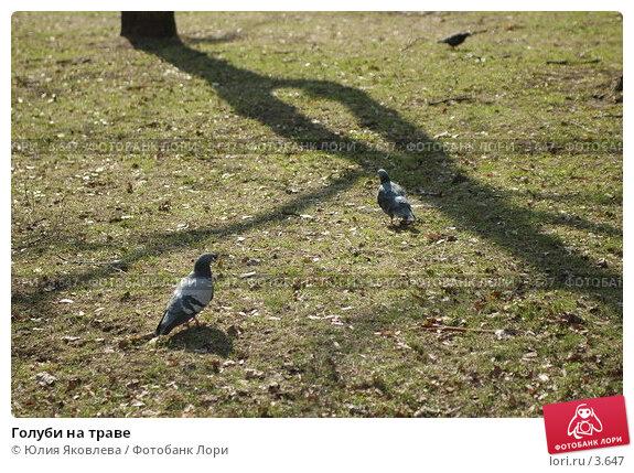 Голуби на траве, фото № 3647, снято 26 апреля 2006 г. (c) Юлия Яковлева / Фотобанк Лори