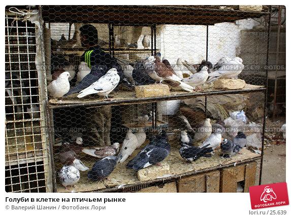 Голуби в клетке на птичьем рынке, фото № 25639, снято 28 ноября 2006 г. (c) Валерий Шанин / Фотобанк Лори