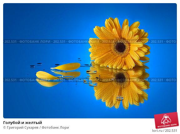 Голубой и желтый, фото № 202531, снято 24 февраля 2017 г. (c) Григорий Сухарев / Фотобанк Лори