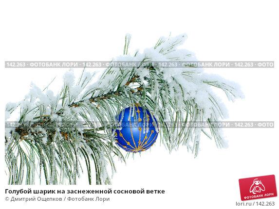 Голубой шарик на заснеженной сосновой ветке, фото № 142263, снято 8 декабря 2007 г. (c) Дмитрий Ощепков / Фотобанк Лори