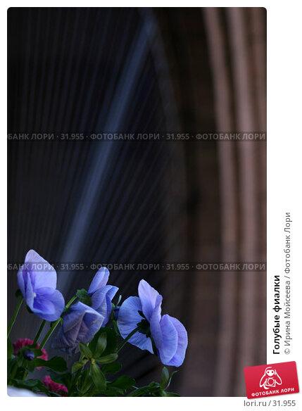 Голубые фиалки, эксклюзивное фото № 31955, снято 24 июня 2005 г. (c) Ирина Мойсеева / Фотобанк Лори