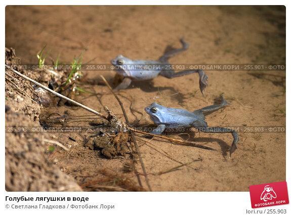 Купить «Голубые лягушки в воде», фото № 255903, снято 29 апреля 2006 г. (c) Cветлана Гладкова / Фотобанк Лори