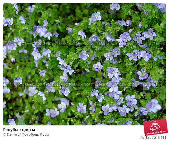 Голубые цветы, фото № 216911, снято 28 октября 2016 г. (c) ElenArt / Фотобанк Лори