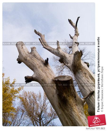 Голые стволы деревьев, устремленные в небо, фото № 101883, снято 29 сентября 2006 г. (c) Борис Панасюк / Фотобанк Лори