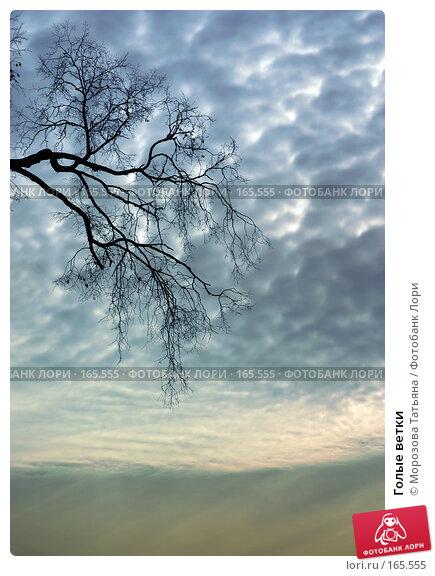 Голые ветки, фото № 165555, снято 22 января 2017 г. (c) Морозова Татьяна / Фотобанк Лори