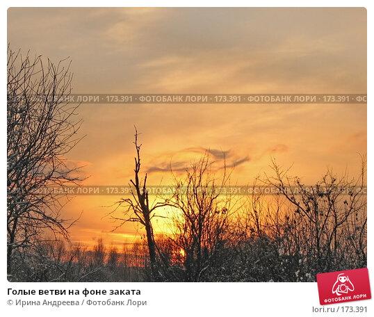 Голые ветви на фоне заката, фото № 173391, снято 8 декабря 2007 г. (c) Ирина Андреева / Фотобанк Лори