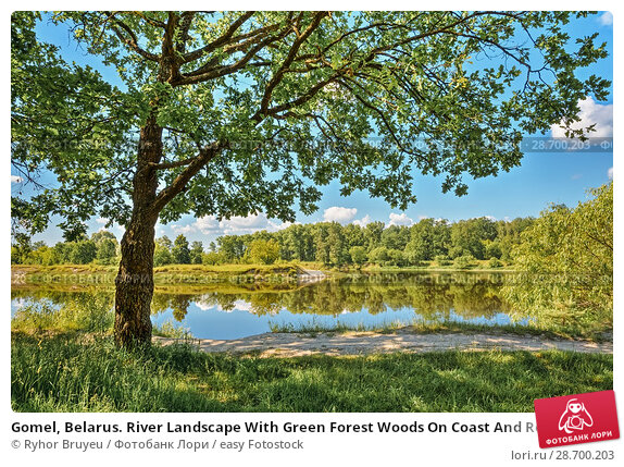 Купить «Gomel, Belarus. River Landscape With Green Forest Woods On Coast And Reflections Of Trees In Water. Summer Sunny Day. Blue Sky. Nobody. Oak Tree On Foreground.», фото № 28700203, снято 13 июня 2016 г. (c) easy Fotostock / Фотобанк Лори