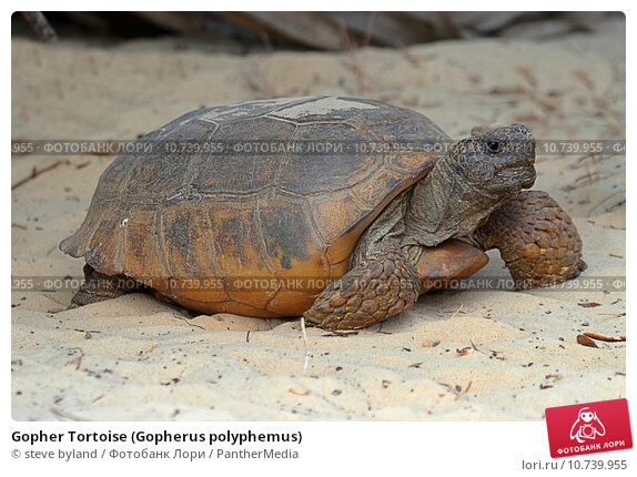 gopher tortoise questions and answers nbbd