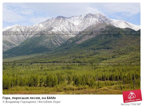 Гора, поросшая лесом, на БАМе, фото № 114147, снято 24 августа 2006 г. (c) Владимир Горощенко / Фотобанк Лори