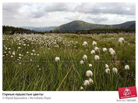 Горные пушистые цветы, фото № 160643, снято 30 июня 2007 г. (c) Юрий Брыкайло / Фотобанк Лори