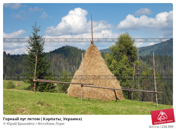 Горный луг летом ( Карпаты, Украина), фото № 234999, снято 2 сентября 2007 г. (c) Юрий Брыкайло / Фотобанк Лори
