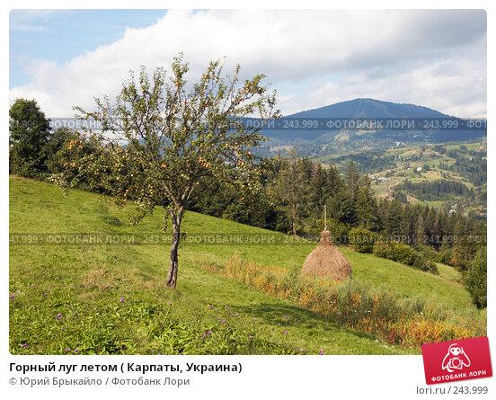 Горный луг летом ( Карпаты, Украина), фото № 243999, снято 2 сентября 2007 г. (c) Юрий Брыкайло / Фотобанк Лори