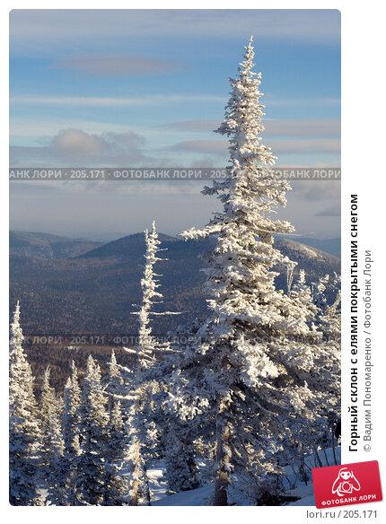 Горный склон с елями покрытыми снегом, фото № 205171, снято 17 февраля 2008 г. (c) Вадим Пономаренко / Фотобанк Лори