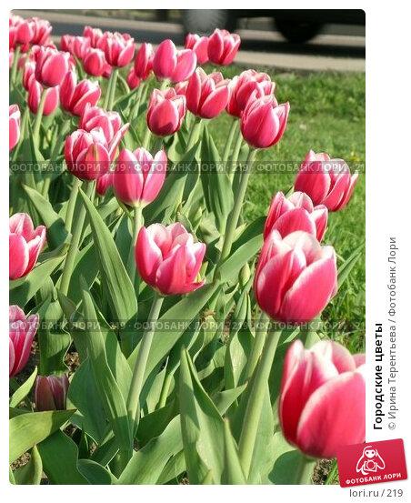 Купить «Городские цветы», эксклюзивное фото № 219, снято 7 мая 2004 г. (c) Ирина Терентьева / Фотобанк Лори