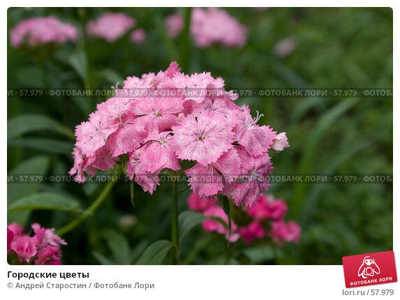 Купить «Городские цветы», фото № 57979, снято 30 июня 2007 г. (c) Андрей Старостин / Фотобанк Лори