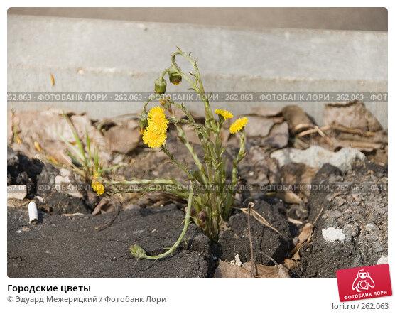 Городские цветы, фото № 262063, снято 23 апреля 2008 г. (c) Эдуард Межерицкий / Фотобанк Лори