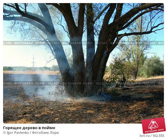 Горящее дерево в пойме, фото № 162555, снято 22 июля 2006 г. (c) Igor Pavlenko / Фотобанк Лори