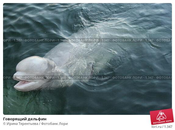 Говорящий дельфин, эксклюзивное фото № 1347, снято 15 сентября 2005 г. (c) Ирина Терентьева / Фотобанк Лори