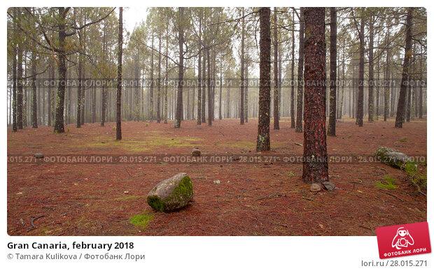 Купить «Gran Canaria, february 2018», фото № 28015271, снято 10 февраля 2018 г. (c) Tamara Kulikova / Фотобанк Лори