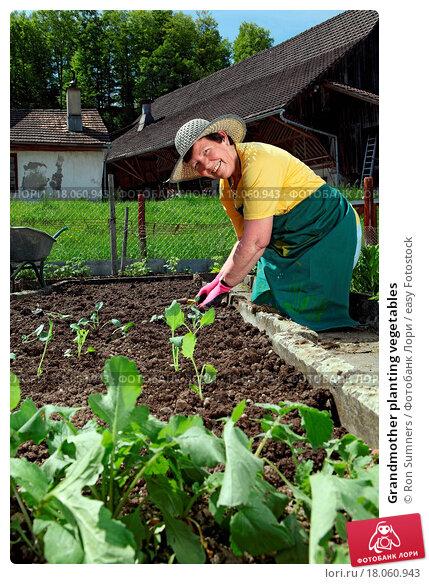 Купить «Grandmother planting vegetables», фото № 18060943, снято 12 декабря 2019 г. (c) easy Fotostock / Фотобанк Лори