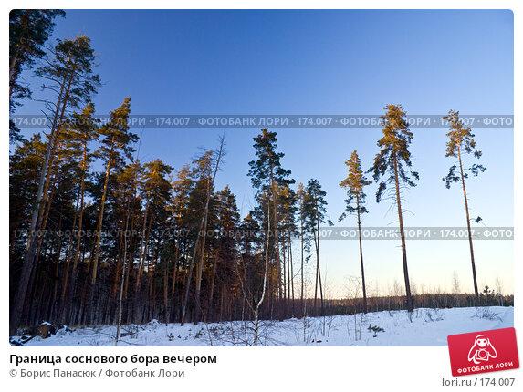 Граница соснового бора вечером, фото № 174007, снято 31 декабря 2007 г. (c) Борис Панасюк / Фотобанк Лори