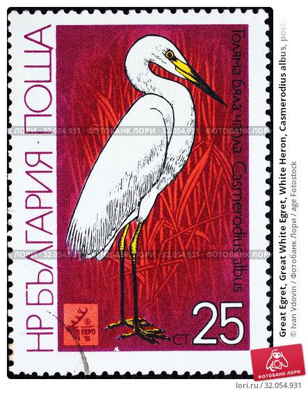 Great Egret, Great White Egret, White Heron, Casmerodius albus, postage stamp, Bulgaria, 1981. (2014 год). Редакционное фото, фотограф Ivan Vdovin / age Fotostock / Фотобанк Лори