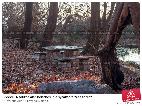 Greece. A source and benches in a sycamore tree forest (2020 год). Стоковое фото, фотограф Татьяна Ляпи / Фотобанк Лори