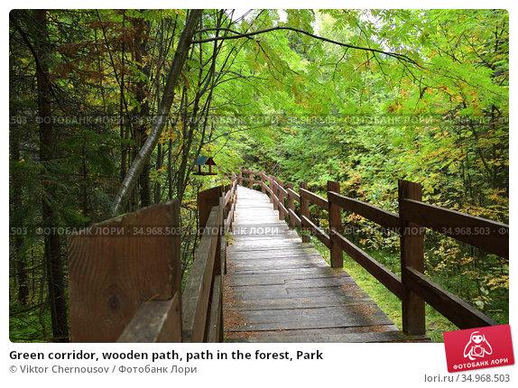 Green corridor, wooden path, path in the forest, Park. Редакционное фото, фотограф Viktor Chernousov / Фотобанк Лори
