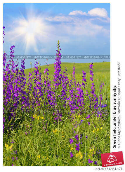 Green field under blue sunny sky. Стоковое фото, фотограф Olena Mykhaylova / easy Fotostock / Фотобанк Лори