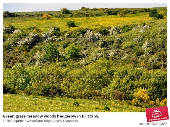 Купить «Green grass meadow woody hedgerow in Brittany.», фото № 28700635, снято 10 мая 2018 г. (c) easy Fotostock / Фотобанк Лори