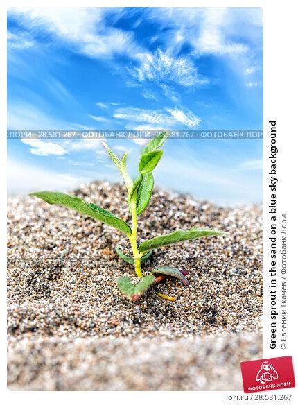 Купить «Green sprout in the sand on a blue sky background», фото № 28581267, снято 13 августа 2016 г. (c) Евгений Ткачёв / Фотобанк Лори