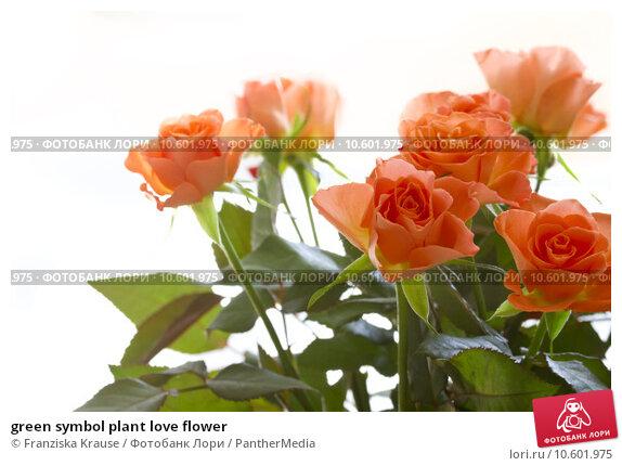 green symbol plant love flower. Стоковое фото, фотограф Franziska Krause / PantherMedia / Фотобанк Лори