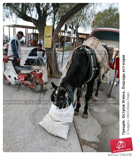 Греция. Остров Эгина. Лошадь ест корм, фото № 318079, снято 12 марта 2008 г. (c) Gagara / Фотобанк Лори