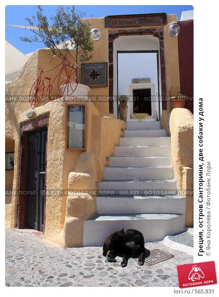 Купить «Греция, остров Санторини, две собаки у дома», эксклюзивное фото № 565831, снято 11 августа 2008 г. (c) Яна Королёва / Фотобанк Лори